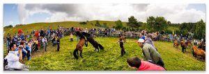 Comprar fotografía de Galicia Fiestas de Galicia Rapa das Estas Candaoso Viveiro Verano San Andrés de Boimente Decoración