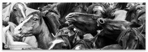 Comprar fotografía Fiestas de Galicia Rapa das Bestas caballos Decoración naturaleza