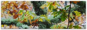 Carballos en el Parque Natural do Invernadeiro Ourense