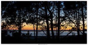 Atardecer-pinos-rias galicia